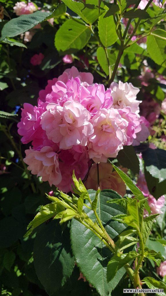 Le Parc de la Pépinière et sa roseraie, parfait pour un week-end à Nancy au printemps !
